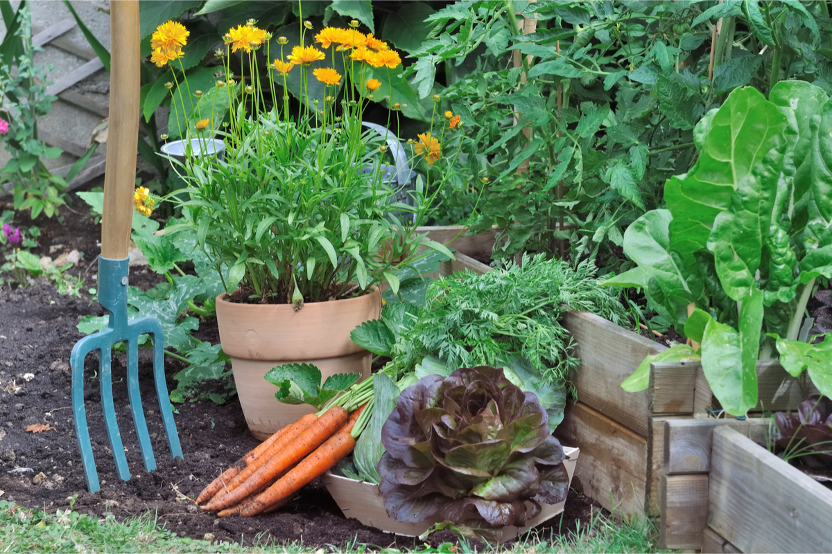 Tips For Growing Your Own Veg When You Have a Small Garden