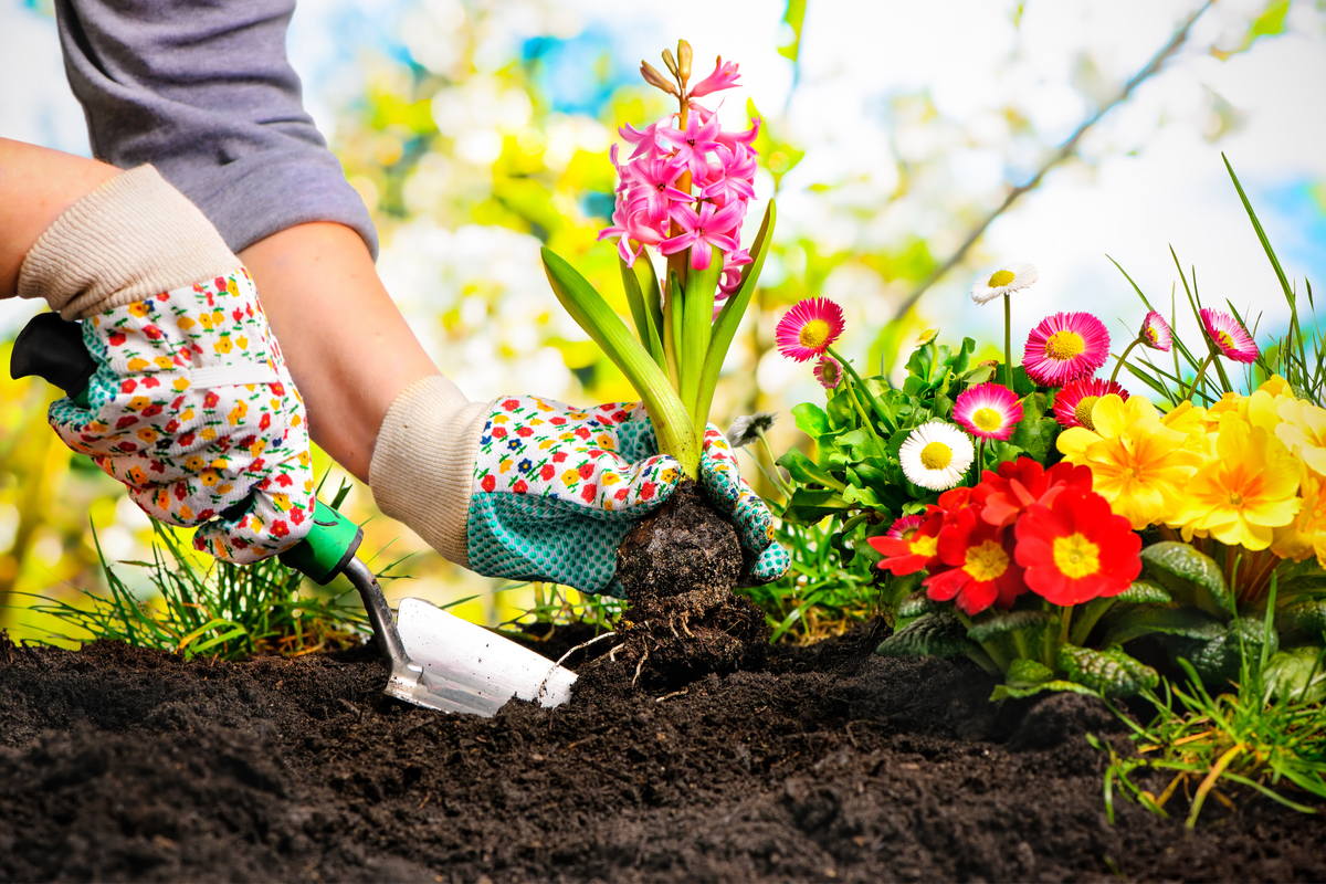 Is Your Garden a Blank Canvas? Flowers and Crops to Plant in February